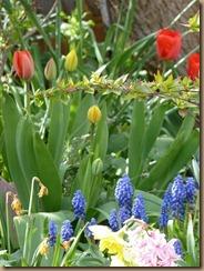 garden colours 009