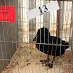 Poultry 11.jpg