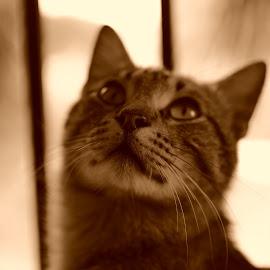 by Danae Kaps - Animals - Cats Portraits
