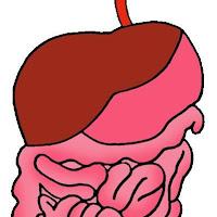 science_digestive_system.jpg