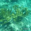Buck Island Reef - IMGP2363.JPG