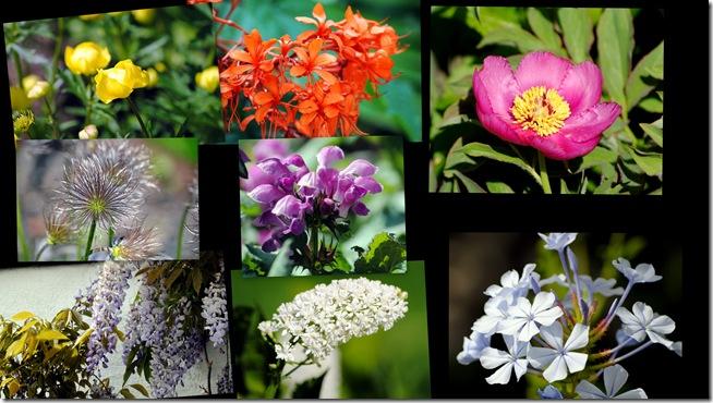 2011-05-29 Botanisk have 2011