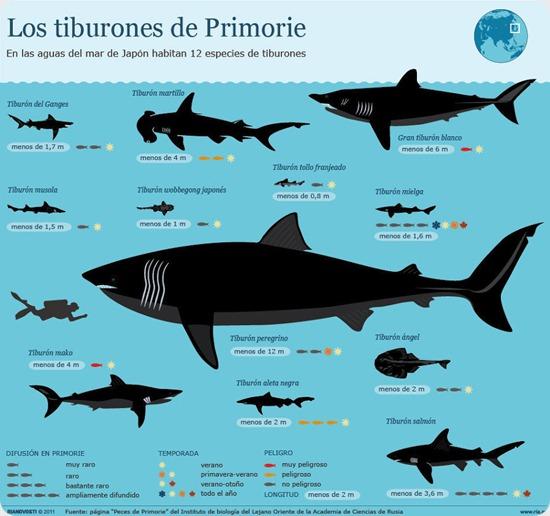tiburones primorie
