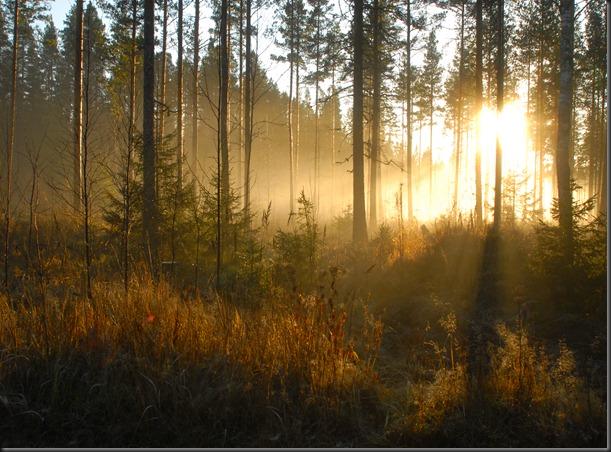 suomalainen syys metsä suppilovahvero 110