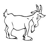 Goat_Capra.jpg
