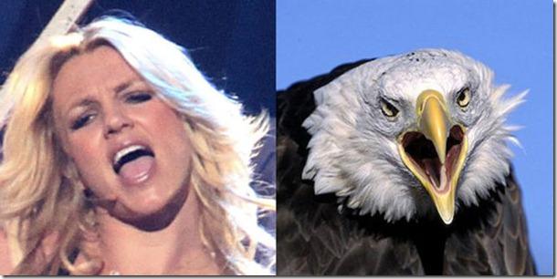pop-stars-birds-3