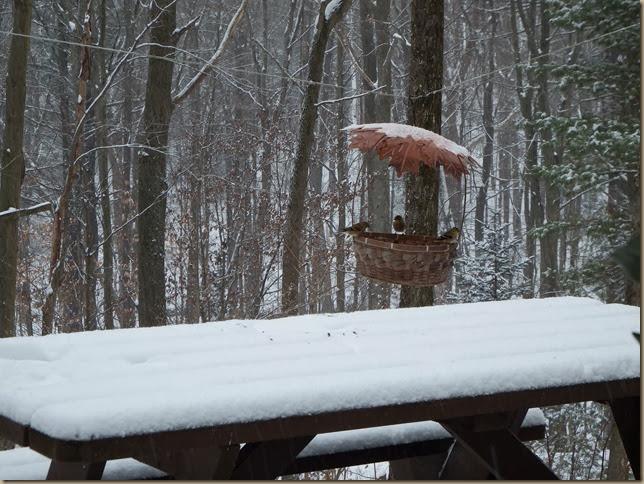 gold finches enjoying their basket bird feeder
