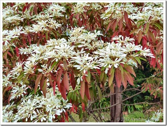 FloweringP1030768