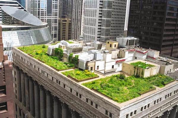 Sân thượng xanh trên nóc tòa nhà cao tầng