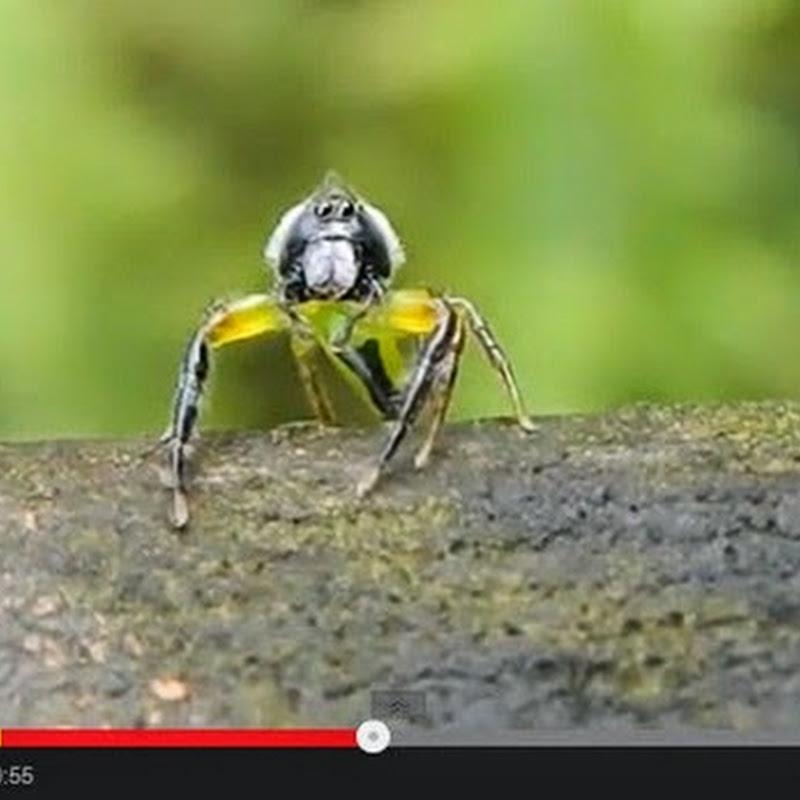 Αράχνη μένει έκπληκτη