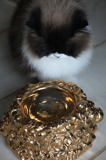 I think I deserve to drink out of a golden bowl.  I am, after all, a highly sophisticated and cultured feline!