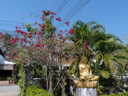 109. flori temple.JPG