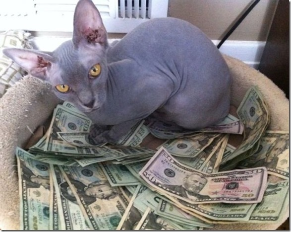 rich-wealthy-cats-1