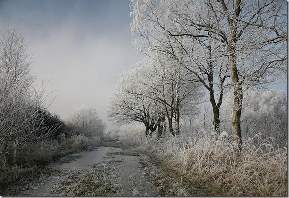 Winter.D_Hoarfrost1