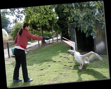 Serena feeding Pelican DSCF4214