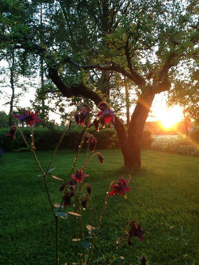 03. Trädgårdsglimt