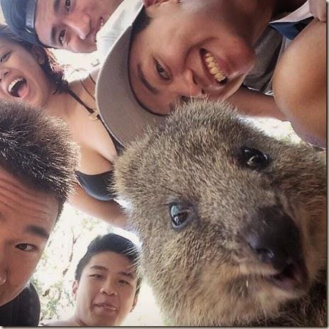 selfies-australian-quokka-021