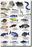 fauna marina III