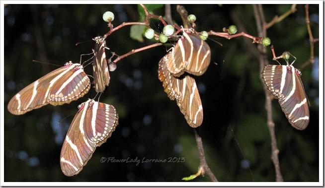 07-24-sleeping-zebras3