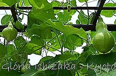 Glória Ishizaka -   Kyoto Botanical Garden 2012 - 74