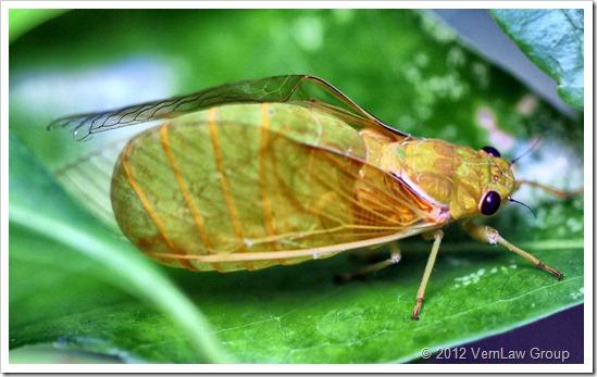 Cicada_IMG_4938 (2)