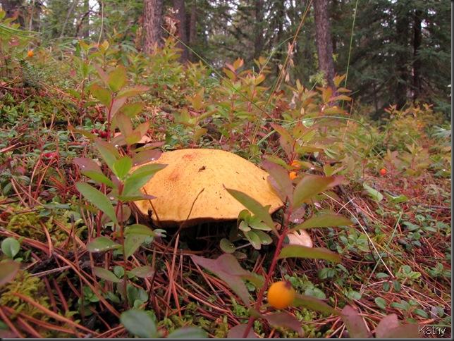 Mushroom and Bastard Toadflax