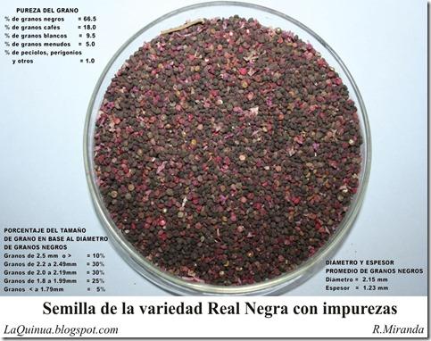 Semillas de Quinua Real Negra con impurezas
