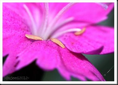 2012 05 27 IMG_4186aw