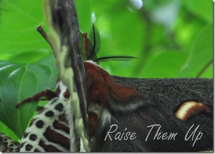 moth mamma