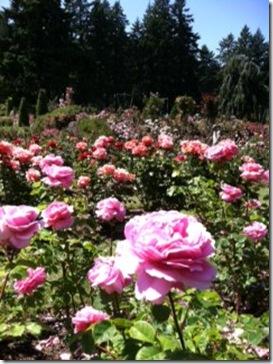 rose garden july