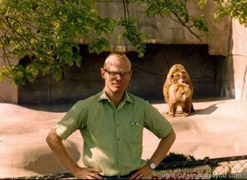 50_Funniest_Animal_Photobombs_Of_All_Time_05