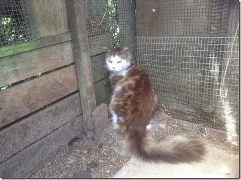Longhaired stray