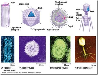 Tipe virus