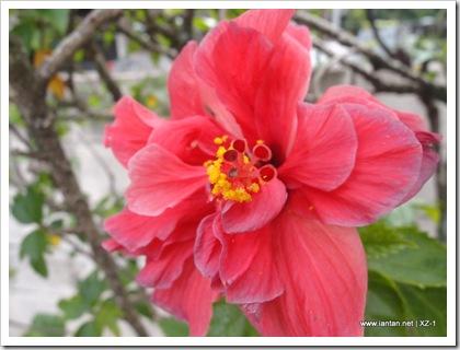 Bunga Raya I