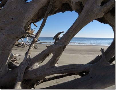 ga_eoy_jekyll_driftwood_beach_8