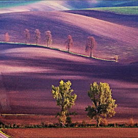 by Ivan Rusek - Landscapes Prairies, Meadows & Fields