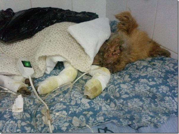 História incrível do salvamento de um cão (8)