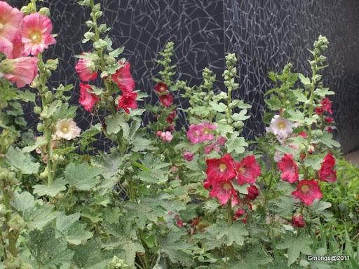 Alcéa - rose tremière