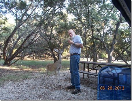 Deer visit 012