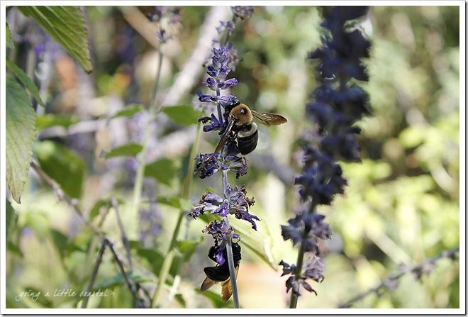 bees2 copy