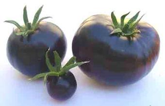 Pomodori neri, viola, blu, con antociani