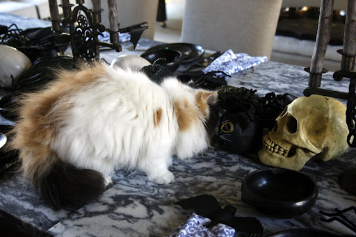 Then she saw the spooky black cat and the human skull!