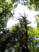 Drevo ob poti