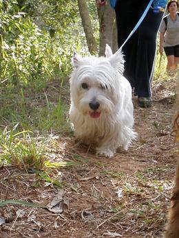Dogs Trekking 4 (124)
