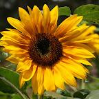angkorsite_flower_1 (10).jpg