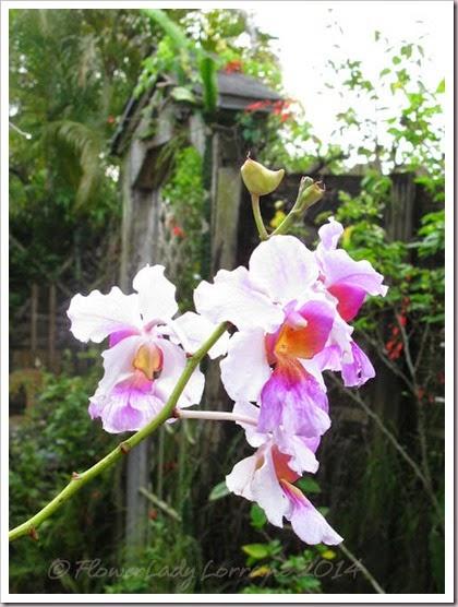04-08-orchids3