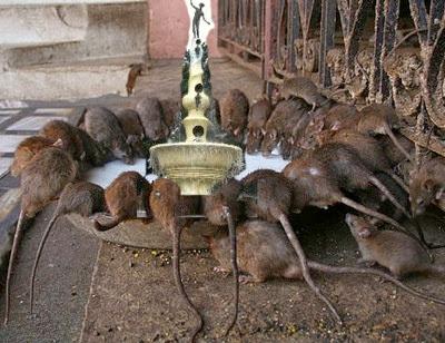 RTC Rats