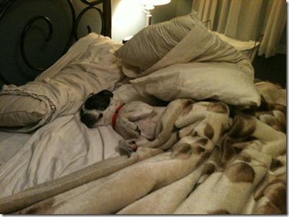 star bedtime