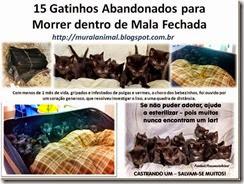 15 Gatinhos Abandonados para Morrer dentro de Mala_thumb[1]