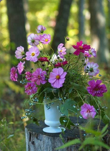 cosmos 995190_10152210978168362_1437938401_n alluring blooms